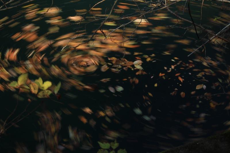 落ち葉の行き先は_c0155950_22224987.jpg