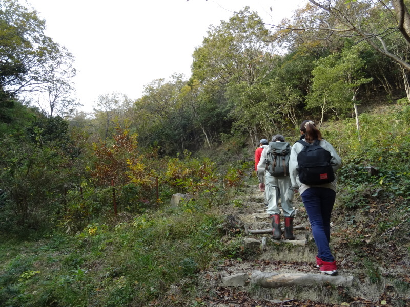 「自然再生実地研修」が 孝子の森で実施されます_c0108460_21002119.jpg