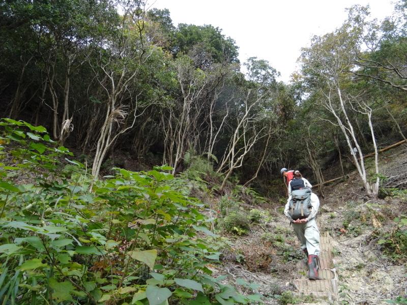 「自然再生実地研修」が 孝子の森で実施されます_c0108460_21010431.jpg