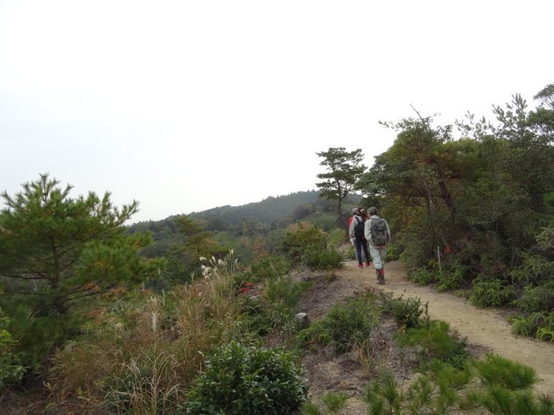「自然再生実地研修」が 孝子の森で実施されます_c0108460_21013816.jpg