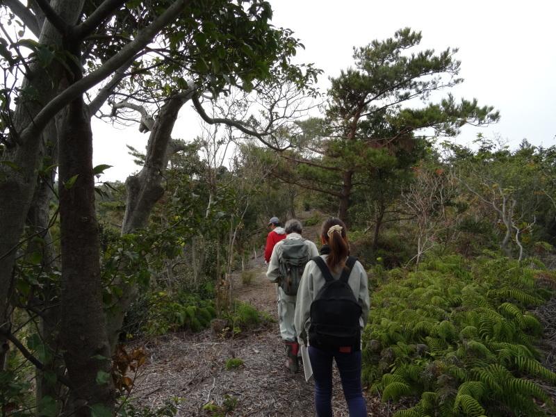 「自然再生実地研修」が 孝子の森で実施されます_c0108460_21013931.jpg