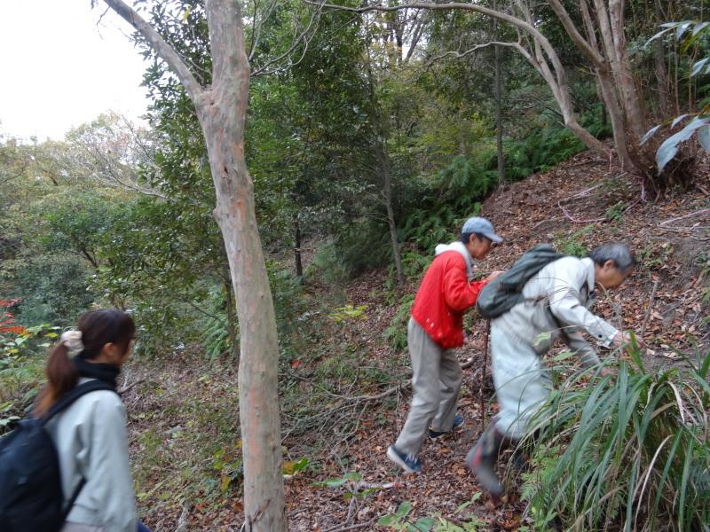 「自然再生実地研修」が 孝子の森で実施されます_c0108460_21032865.jpg