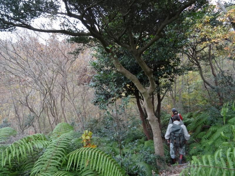 「自然再生実地研修」が 孝子の森で実施されます_c0108460_21032996.jpg