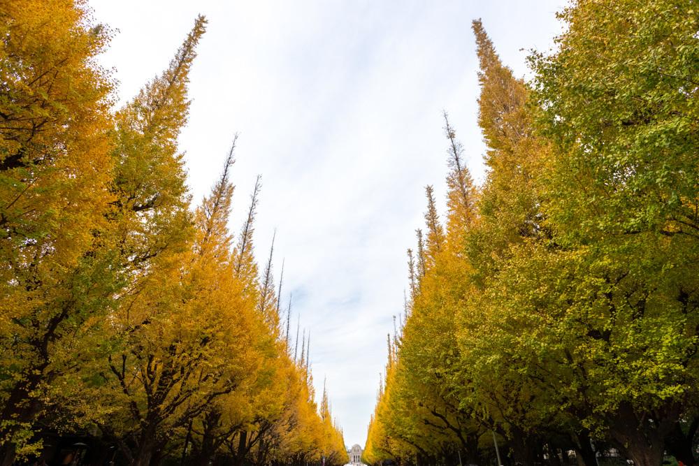 神宮外苑 銀杏並木の黄葉は少し早かった_a0261169_18523771.jpg