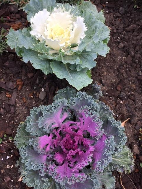 芍薬と立葵の球根と最近の庭_e0350971_00044103.jpg