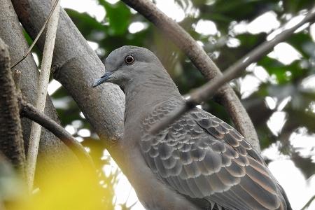 ★先週末の鳥類園(2018.11.23~25)_e0046474_21213941.jpg