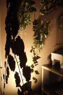 フボーと植物展 白(ハク)7 at  hakutoya  sasayama~夜~_f0226293_08370700.jpg