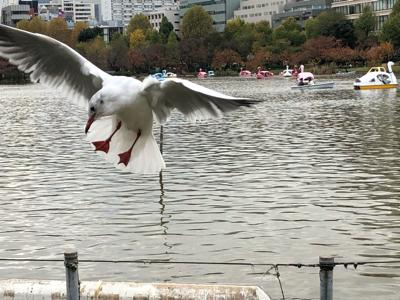 晩秋の上野公園_c0106100_18223475.jpg