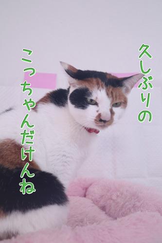 e0072606_19210181.jpg