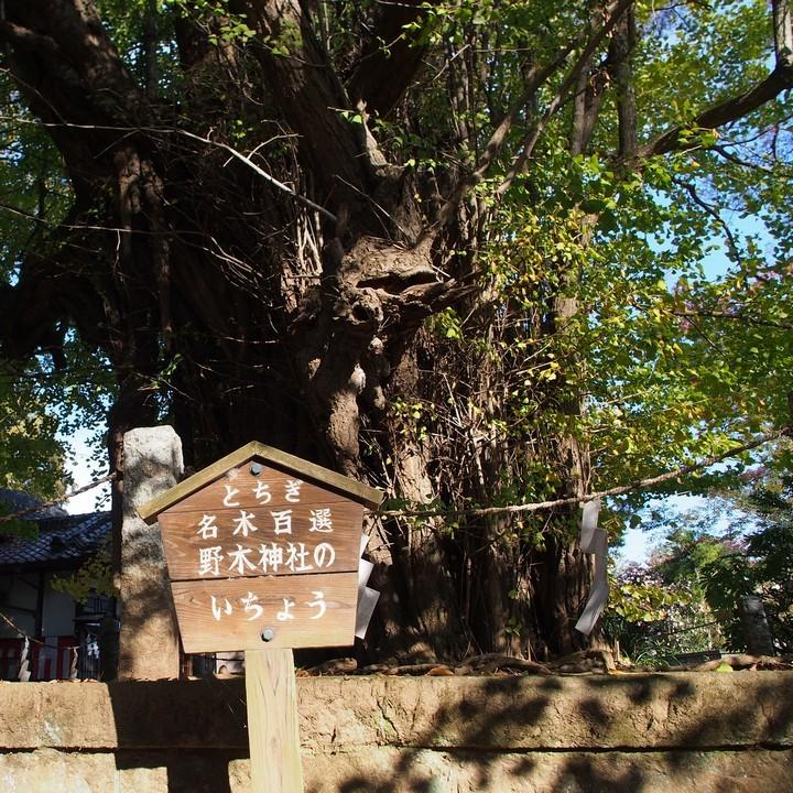 野木神社_a0268412_22443393.jpg