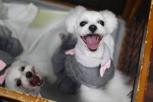 11月24日ご来店のワンちゃんです!!_b0130018_09003992.jpg
