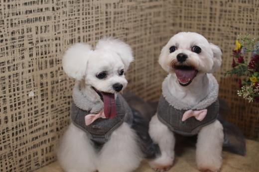 11月24日ご来店のワンちゃんです!!_b0130018_09004802.jpg