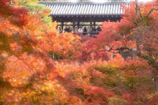 Autumn colors    ・・・京都・・・2_f0333031_05482481.jpg