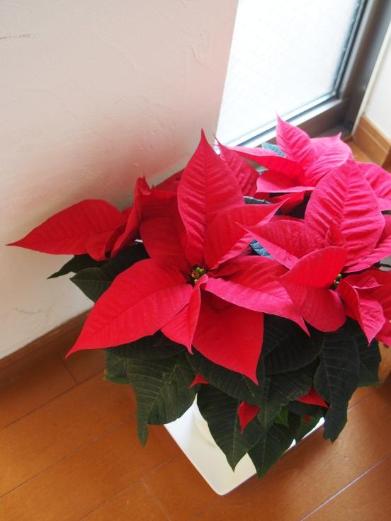 クリスマスを楽しむおもてなしごはんとシュトーレン_d0128268_16154988.jpg
