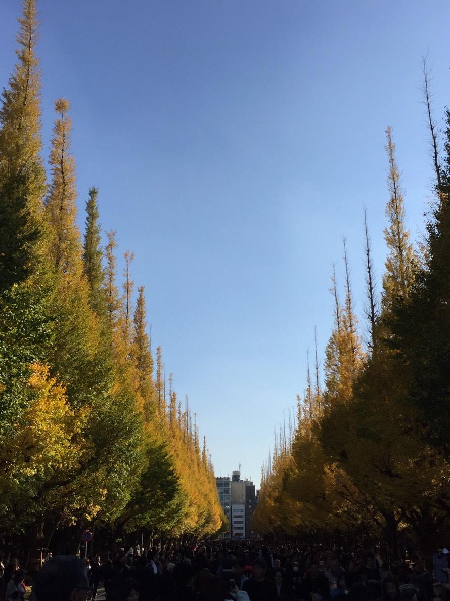 「銀杏祭り」_a0075684_10123288.jpg