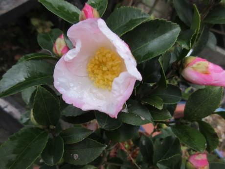 ねこたち、花たち_a0203003_20061543.jpg