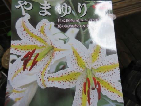 ねこたち、花たち_a0203003_20063671.jpg