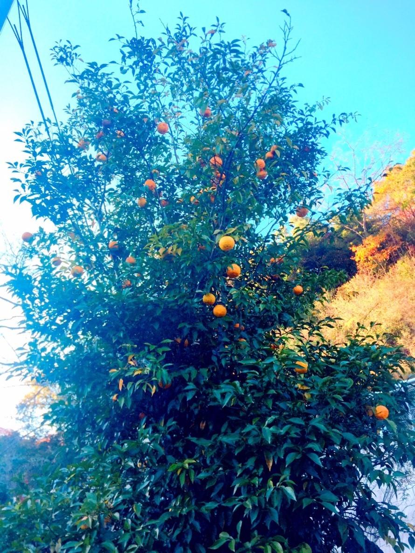 2018 Autumn 2_e0115904_17414911.jpg