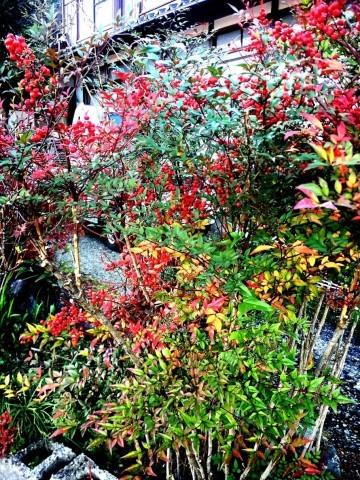 2018 Autumn 2_e0115904_17421235.jpg