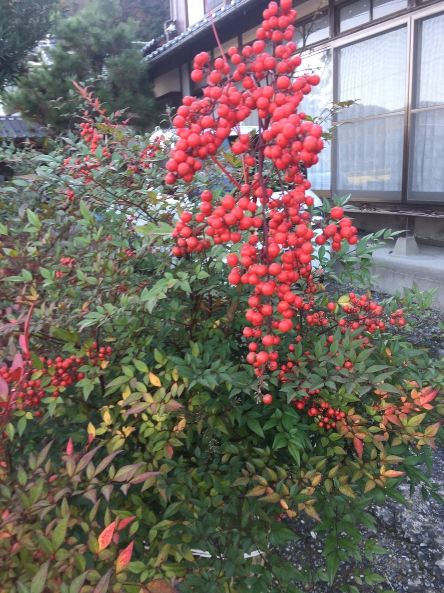 2018 Autumn 2_e0115904_17422123.jpg