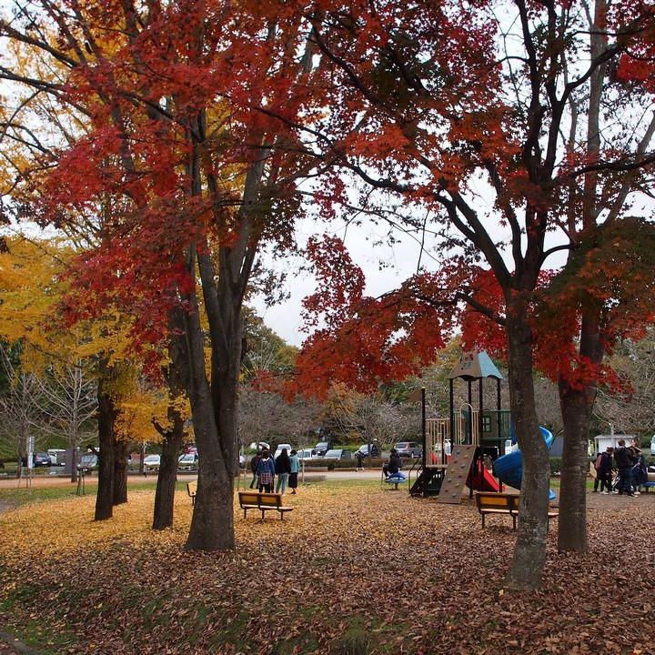 晩秋のミューズパーク(その1)_a0268412_23284708.jpg