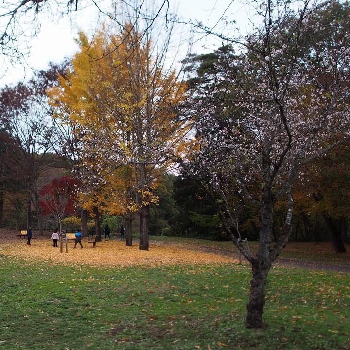 晩秋のミューズパーク(その1)_a0268412_23285638.jpg