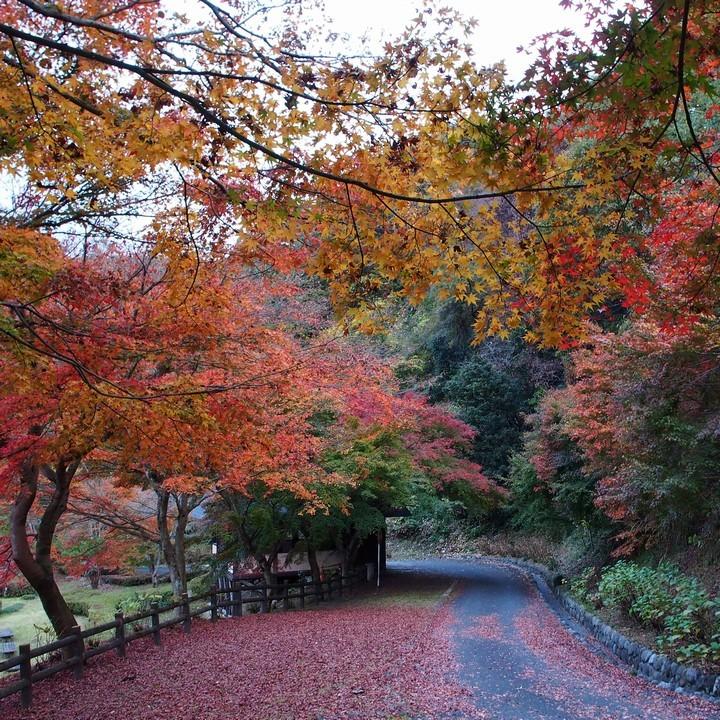 晩秋のミューズパーク(その2)_a0268412_23312328.jpg