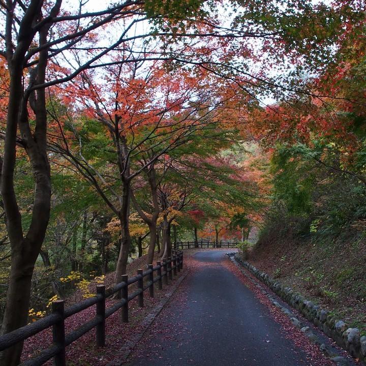 晩秋のミューズパーク(その2)_a0268412_23312366.jpg