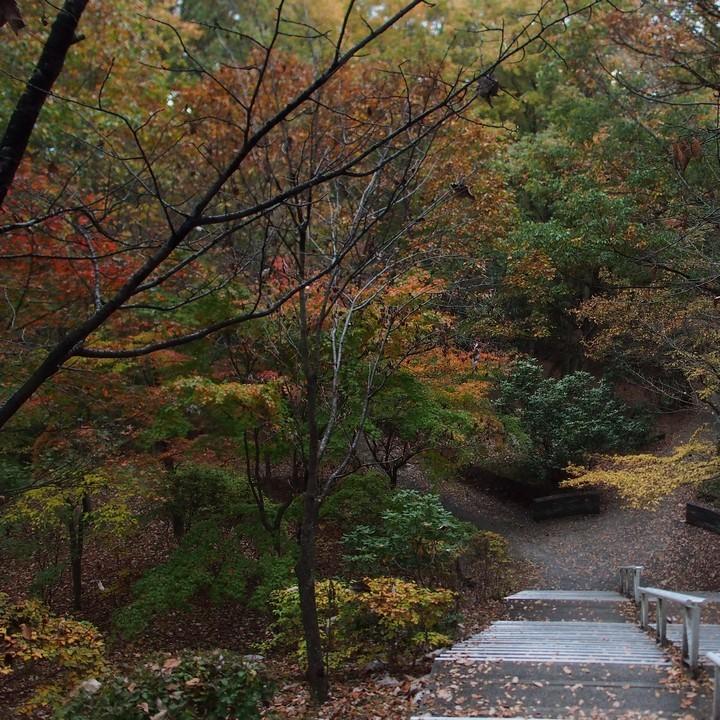 晩秋のミューズパーク(その2)_a0268412_23312405.jpg