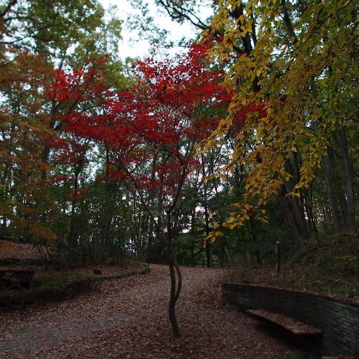 晩秋のミューズパーク(その2)_a0268412_23312423.jpg