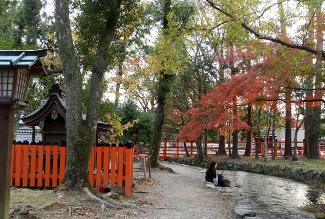 上賀茂神社 紅葉の盛り_e0048413_20442989.jpg