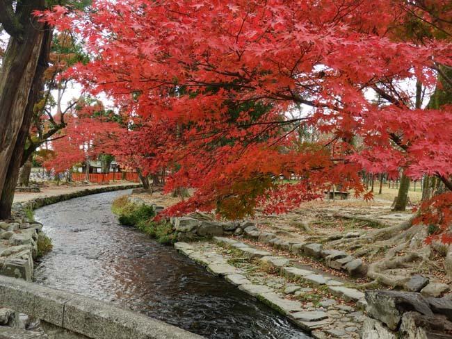 上賀茂神社 紅葉の盛り_e0048413_20443296.jpg