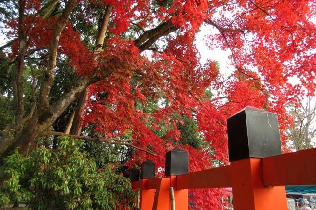 上賀茂神社 紅葉の盛り_e0048413_20445053.jpg