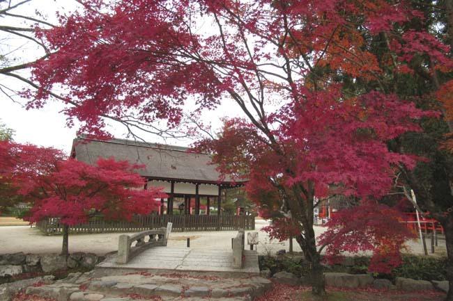 上賀茂神社 紅葉の盛り_e0048413_20445819.jpg