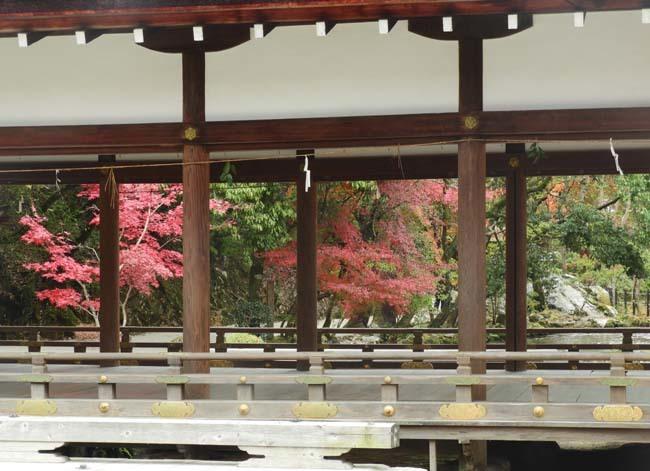 上賀茂神社 紅葉の盛り_e0048413_20450227.jpg
