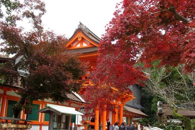 上賀茂神社 紅葉の盛り_e0048413_20450657.jpg