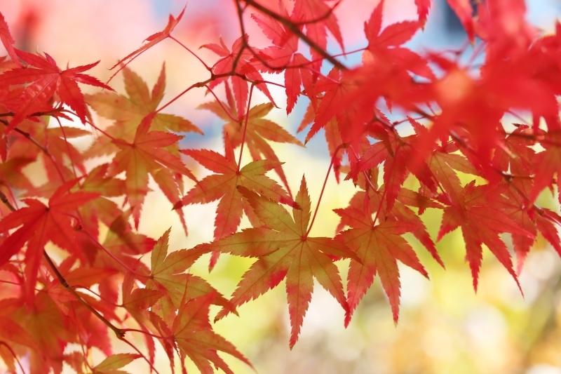 喜楽亭で楽しむ おいしい日本茶 11月_b0220318_14484462.jpg