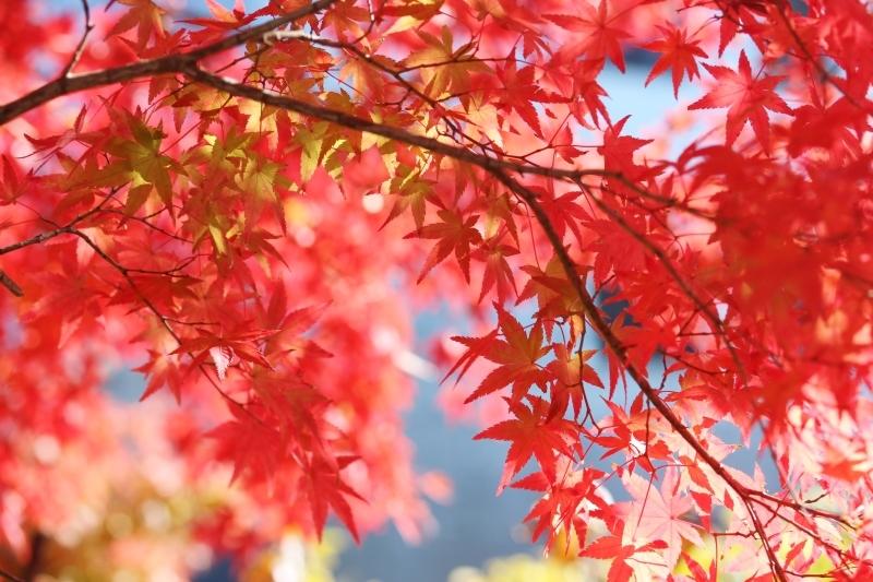 喜楽亭で楽しむ おいしい日本茶 11月_b0220318_14485205.jpg