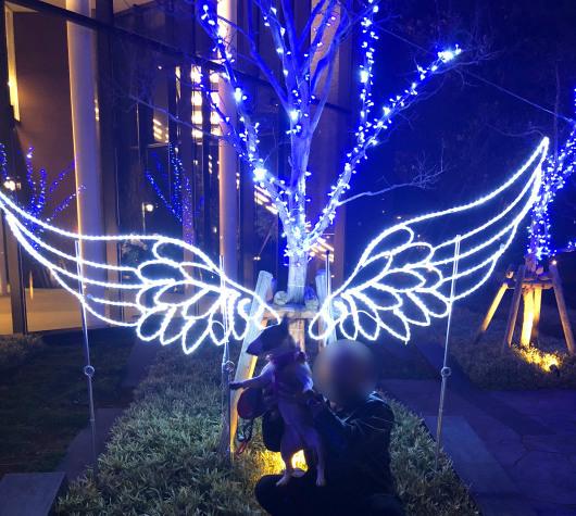 天使がやってきた!_b0310424_11460505.jpg