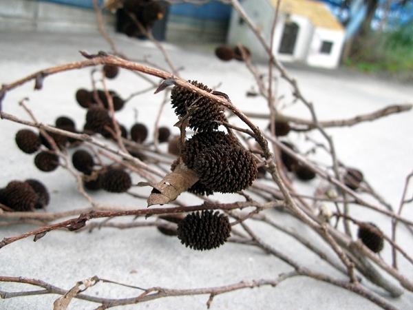 秋の実 収穫_f0129726_22330824.jpg