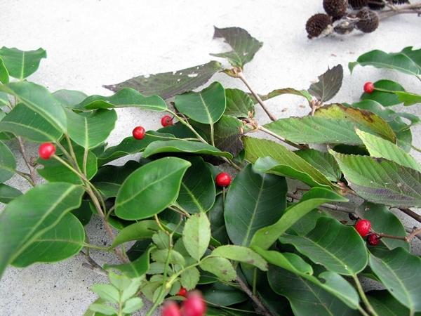 秋の実 収穫_f0129726_22375986.jpg