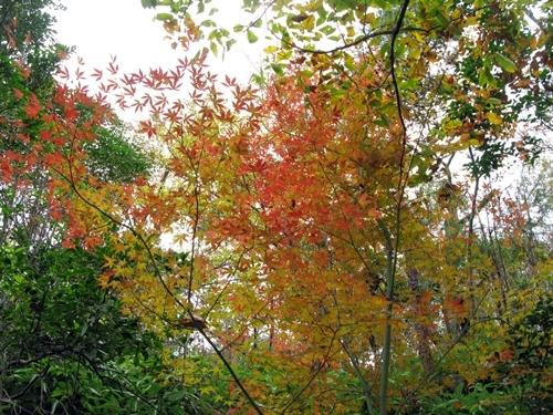 秋の実 収穫_f0129726_22544748.jpg