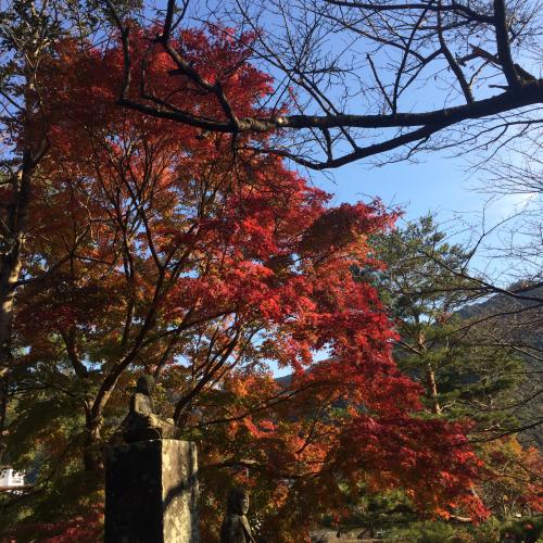 紅葉は晴れても雨でも_e0103327_23144648.jpg