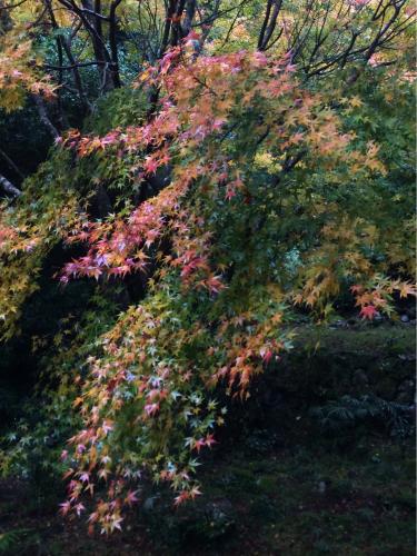 紅葉は晴れても雨でも_e0103327_23152151.jpg