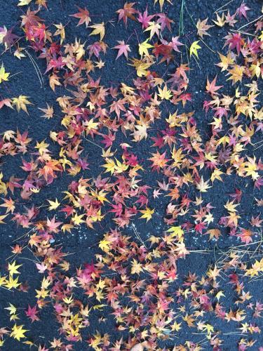 紅葉は晴れても雨でも_e0103327_23155518.jpg