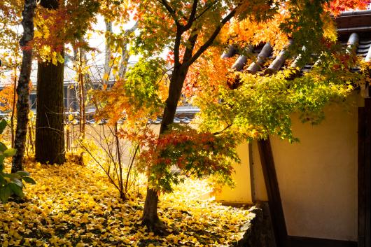 Autumn Colors   ・・・京都・・・3_f0333031_07114269.jpg