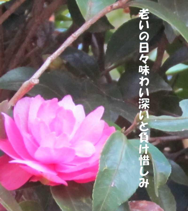 f0117041_06205969.jpg