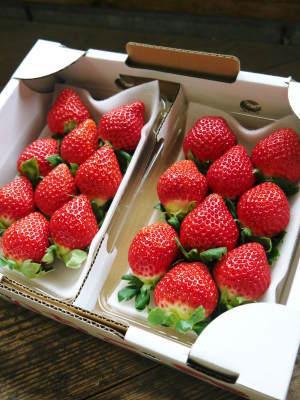 熊本イチゴ第1弾! 熊本限定栽培品種のイチゴ『熊紅』令和元年度の先行予約受付明日よりスタート!!_a0254656_17501872.jpg