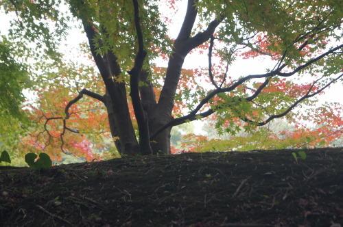 栗林公園 2_e0181373_19475198.jpg
