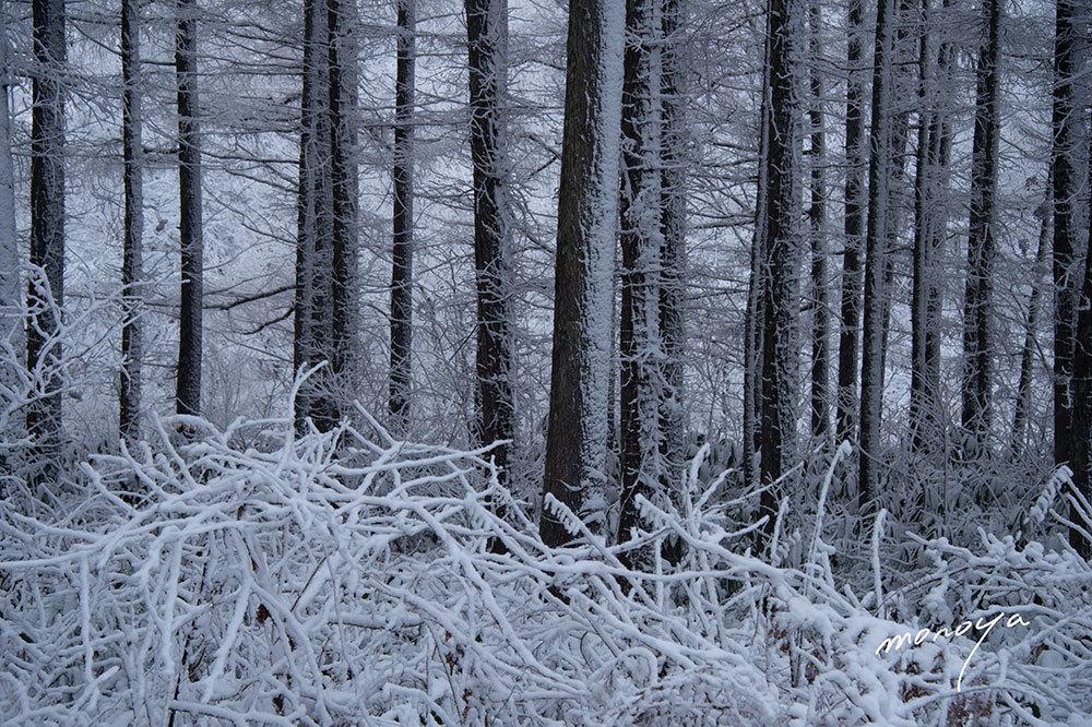 今年初めての雪_c0085877_06012027.jpg